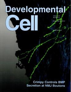 Magazine cover of Developmental Cell from December 2014.
